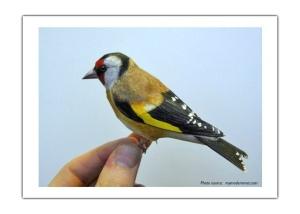 J.S. Birds2