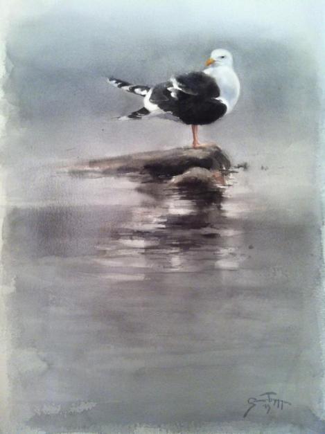 "Seagull. Watercolor 22x30"" Havstrut akvarell 56x76cm - Gunnar Tryggmo"