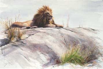 On the pride rock/ Lejon / Akvarell / 102x152cm Såld. - Gunnar Tryggmo