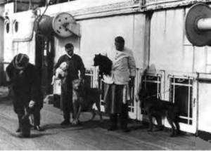 ∫  This is also a reported photo of crew members on the RMS Titanic walking the dogs.  However, according to David Davidson, the photo is not one of the Fr. Frank Browne collection and appears to not have been taken on the Titanic.  This could also be a representative photo.