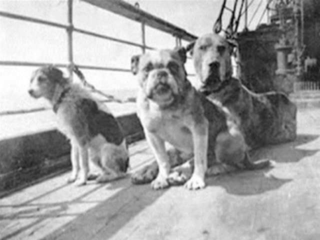 "∫  This is a famous photo of 3 dogs tied to the rail of the Titanic taken by Fr. Frank Browne.  These 3 dogs are thought to represent the dogs of 3 passengers from the Titanic: Fox Terrier (owned by William Dulles ), Bulldog (named ""Gamin de Pycombe,"" owned by Robert Daniels) and Great Dane (owned by Ann Isham). This photo is thought to have been taken by Fr. Frank Browne, who took most of the famous photos of the Titanic before it sailed on its maiden voyage. After some extensive research, this photo appears to be a representative photo of dogs that did not survive the sinking and is not authentic. (Photo credit: Smithsonian)"