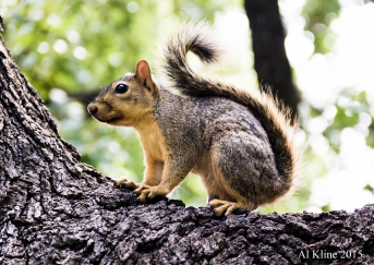 Squirrel Sideways